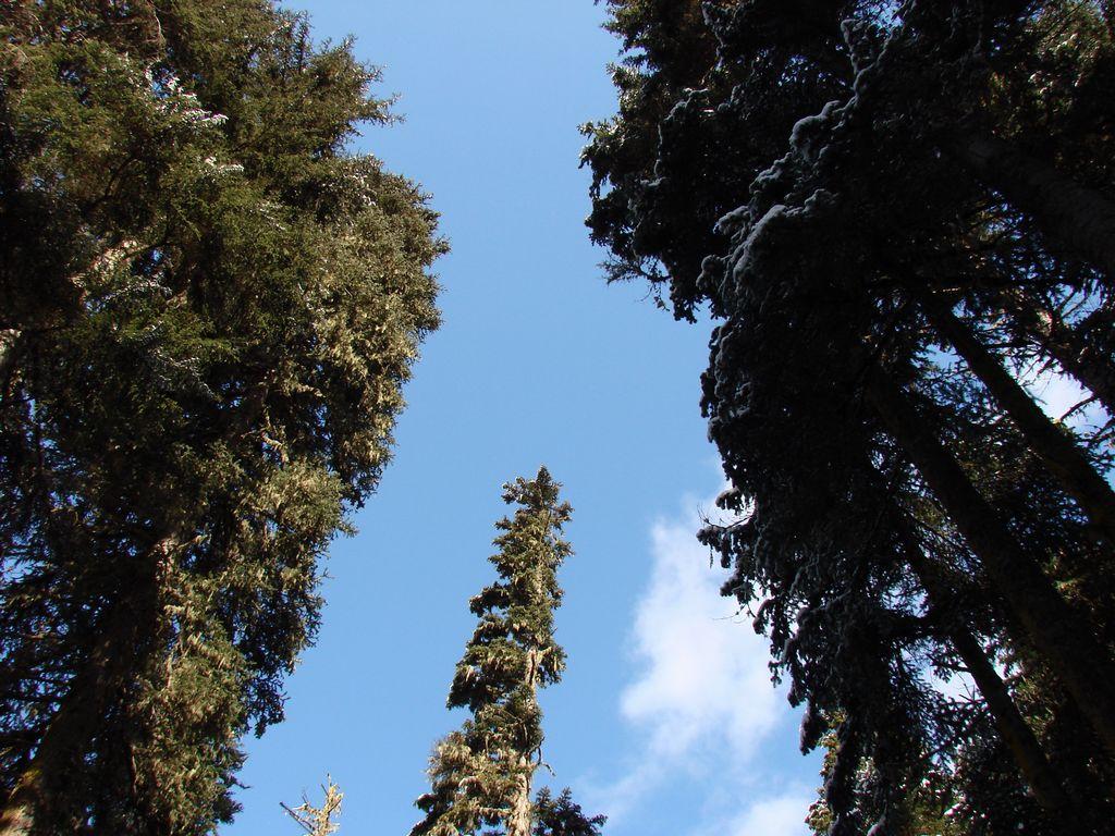 Елки палки - аццкей лес, через него продирались к цивилизаци