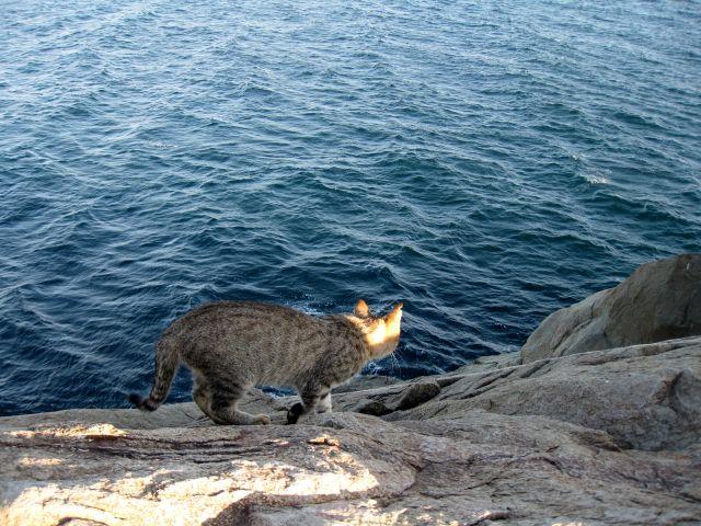 Кот на Айваз