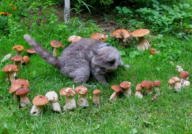 Пенс и грибы