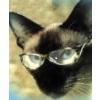 Интернет магазины - последнее сообщение от Catnip