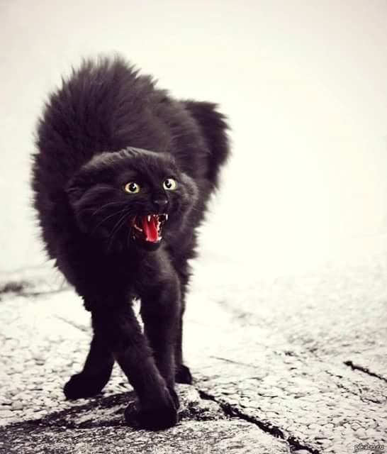 Фотография Black Cat