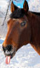 Аренда лыж в Гармише - последнее сообщение от Саврасов